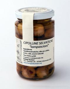 CIPOLLINE SELVATICHE