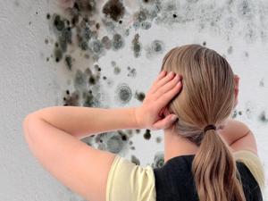 Idropittura murale per interno Antimuffa Igienix Traspirante LINVEA