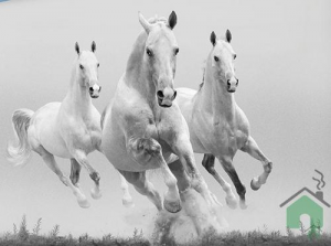 Set Copripiumino matrimoniale GABEL + lenzuolo sotto e federe Mustang
