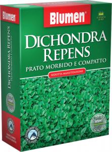DICHONDRA REPENS