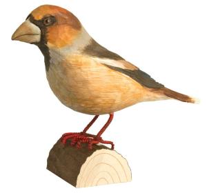 Deco Bird / WG424 - Frosone Comune
