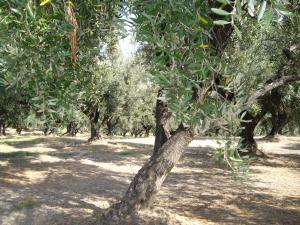 Olio Lametium Bio  - 0,50lt