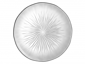 ARC Set Of 6 Transparent Soleil Glass Cymbals 27 cm