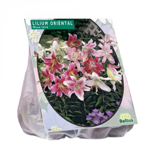 BALTUS Lilium Oriental Mix Pezzi 5 Bulbi Da Fiore Semina In Autunno