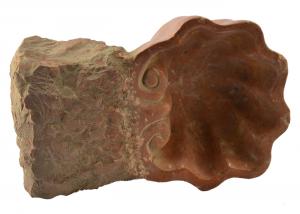 'Vaschetta acquasantiera conchiglia multiuso in marmo ''rosso Francia'' AQ-13-rf'