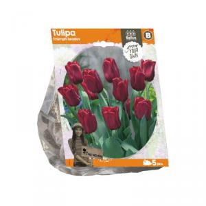 BALTUS Tulipa triumph seadov bulbi da fiore in formato sacchetto