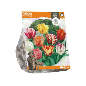 BALTUS Tulipa parrot mixed bulbi da fiore in formato sacchetto