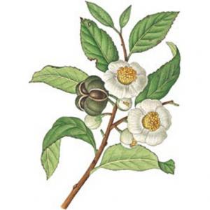 Tè Verde Cinese Gunpowder Special