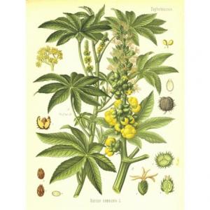 Herbo Veneta Olio di Ricino