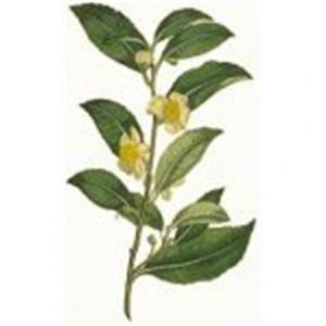 Tè Pu Erh foglie