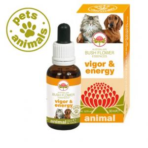 Vigor & Energy Pets