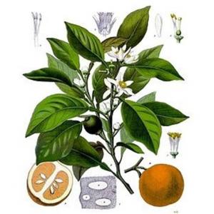 Arancio Fiori