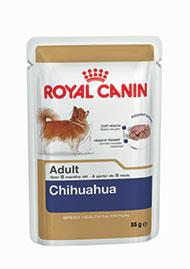 Chihuahua Wet