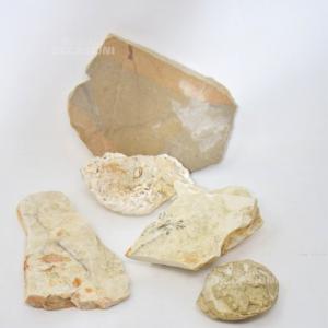 Fossile Di Bolca