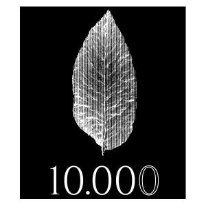 10.000 Liquido Pronto