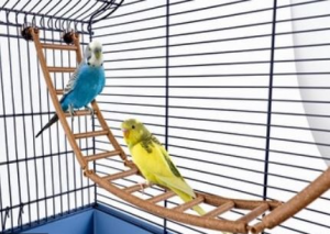 Scaletta per uccelli