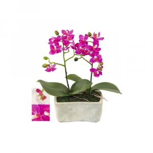 Piantina Orchidea In Vaso Ceramica