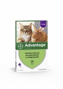 ADVANTAGE 80mg soluzione spot-on per gatti e  conigli