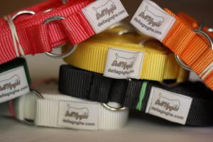 Box obedience di vari colori, inclusi picchetti per fissaggio