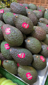 Avocado varietà Hass