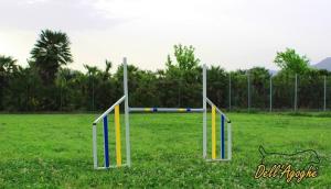 Salto agility dog in alluminio, conformi al regolamento enci-fci, Dell'Agoghè