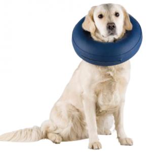 Collare di protezione gonfiabile , collare elisabetta per cani  Trixie