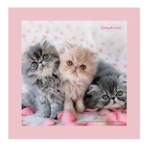 GATTINI quadro in legno pannello d'arredo rosa SOFTIES & CUTIES 20x20 cm idea re