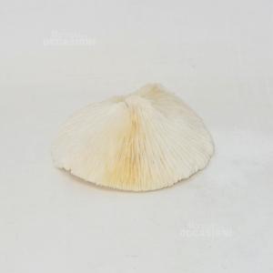 Corallo Bianco 16cm