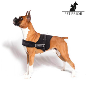 Pettorina Regolabile per Cani Pet Prior - Taglia: S