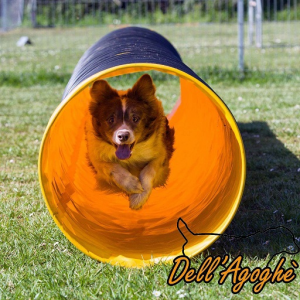 Tunnel agility dog standard, varie misure
