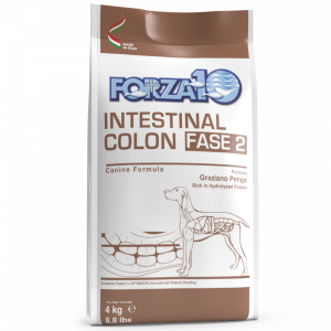Intestinal Colon Fase 2