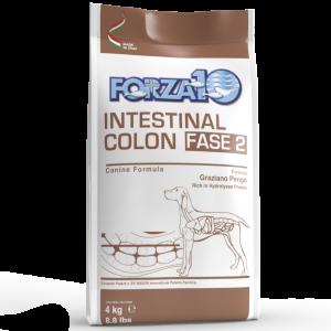 Intestinal Colon Fase 2