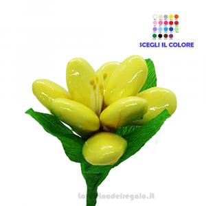 Fresia gialla in cellofan Fiore di Confetti William Di Carlo Sulmona - Italy