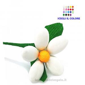 Margheritina bianca Fiore di Confetti William Di Carlo Sulmona - Italy