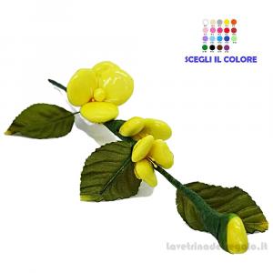 Forsizia gialla Fiore di Confetti William Di Carlo Sulmona - Italy