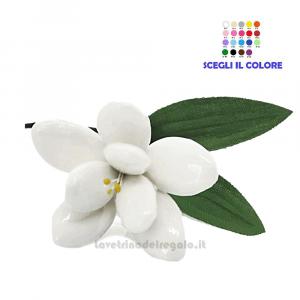 Giunchiglia bianca Fiore di Confetti William Di Carlo Sulmona - Italy