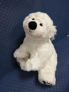 orso polare bianco di Bukowski