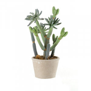 cactus piccolo