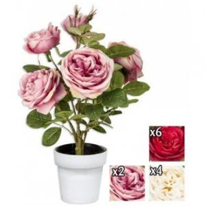 Vea Pianta Rosa Open 35x45 cm Vari Colori Di Rose Piantina Decorazione Casa