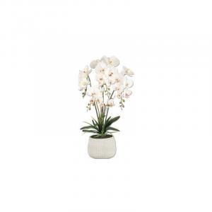 Vea Pianta Orchidea King 72 cm Pianta Colorata Interno Casa Arredare con Stile