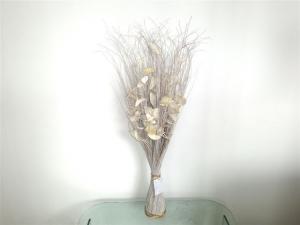 Pianta Ornamentale 5990