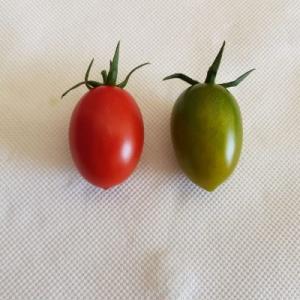 Pomodoro verde insalata - 250gr