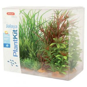 Plantkit Jalaya 6 piante ZOLUX