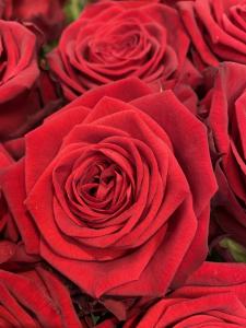 Mazzo di rose rosse a gambo medio - Scegli il numero di rose che vuoi
