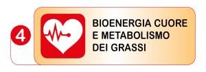 Test Bioenergia Cuore e Metabolismo dei Grassi
