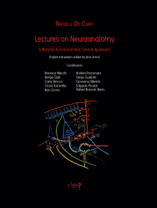 Lectures on Neuroanatomy
