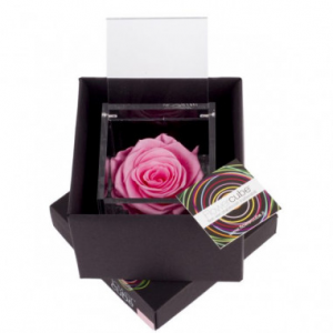 Flowercube rose stabilizzate colore rosa