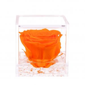 Flowercube rose stabilizzate colore arancio
