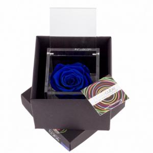Flowercube rose stabilizzate colore blu