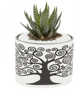 Vaso pianta
